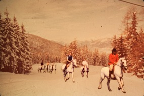 Horses in the snow - Paarden in de sneeuw